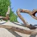 Rattlesnake by tamas kanya