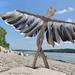ICARUS-Driftwood art from Hungary by tamas kanya