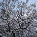 Kupakos, havas