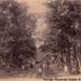 A Rákospalotai erdő 1891-ben