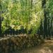 Göcseji erdő 2003