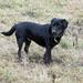 Rufus (IMG 7742)