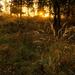 Album - Mátraballai erdő