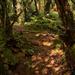 Puzzle Wood, Gloucestershire, England