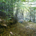 Bringák elrejtve valahol a vadonban