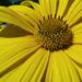 Makró virág