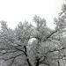 048 Téli erdő