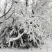 054 Téli erdő