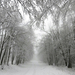 057 Téli erdő