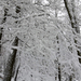 059 Téli erdő