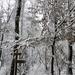 060 Téli erdő