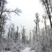 063 Téli erdő