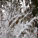 066 Téli erdő