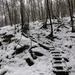 071 Téli erdő