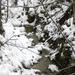 072 Téli erdő