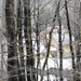 078 Téli erdő