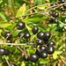 fekete az őszben
