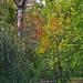 lépcső az ősz felé
