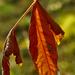 őszi csillogás