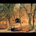 Mesebeli kerek erdő...
