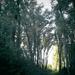 Erdőkatedrális