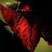 Album - Kaleidoszkóp