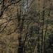 Tavaszi erdő 1