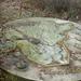 Nepliget-20111230-17-BAZmegye