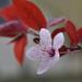 felső virág 041