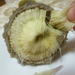 zöldseg artichoke-heart-haj