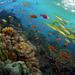 koral5