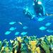 koral1