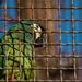 BP - Állatkert 2