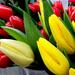 decemberi tavasz a piacon
