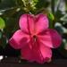 Virágaim 3