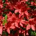 Rododendronok között 24
