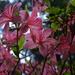Rododendronok között 26