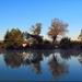 Horgász tó