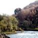 Marospart ősz. Ratosnya, a Borziai híd közelében. Erdély