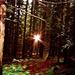 Erdély. Csíkszentimre-Büdösfürdő, kitünő gombászóhely