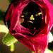 Virágok - Üdvözletek