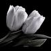 Fekete_fehér és szépia