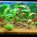 300l akvárium