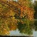 A tó 032