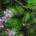 Arborétum 080