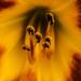 Album - Virágok (Flowers)