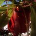Album - Húsevő növények