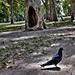 Városligeti galambok Budapest
