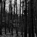A szürke erdő Soproni-hegység