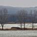 Fák a havas tájban